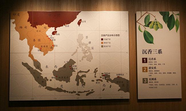 全球沉香产区和沉香树种介绍
